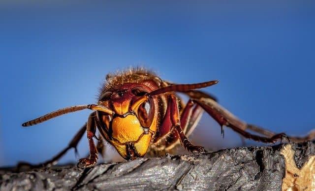 marketing for pest control companies